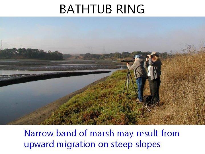 BATHTUB RING Narrow band of marsh may result from upward migration on steep slopes