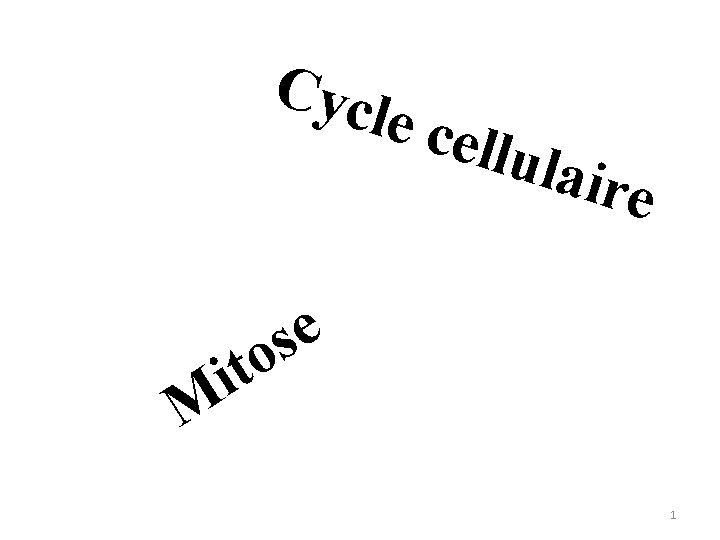 Cycl e cel lulai re e s to i M 1