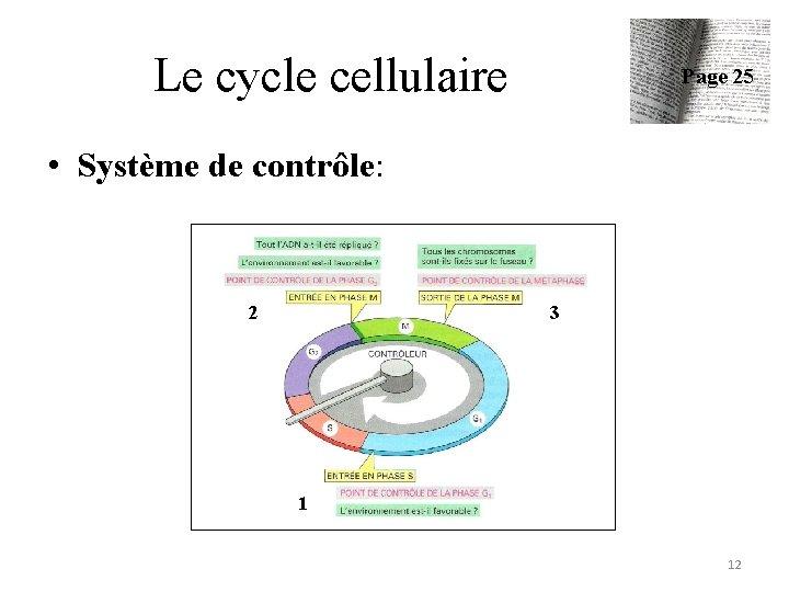 Le cycle cellulaire Page 25 • Système de contrôle: 2 3 1 12