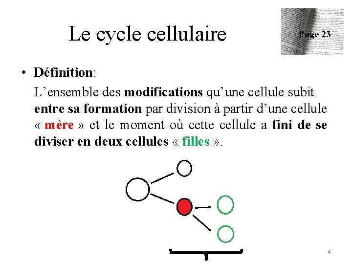 Le cycle cellulaire Page 23 • Définition: L'ensemble des modifications qu'une cellule subit entre