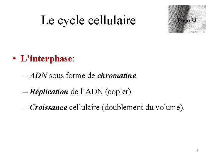 Le cycle cellulaire Page 23 • L'interphase: – ADN sous forme de chromatine. –
