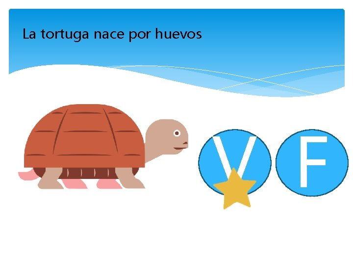 La tortuga nace por huevos V F