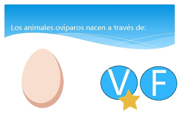 Los animales ovíparos nacen a través de: V F