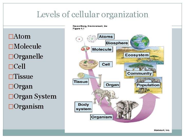 Levels of cellular organization �Atom �Molecule �Organelle �Cell �Tissue �Organ System �Organism