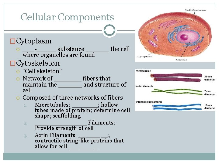 """Cellular Components �Cytoplasm ___-_____ substance ______ the cell where organelles are found �Cytoskeleton """"Cell"""