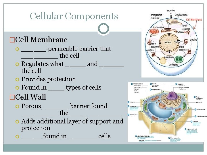 Cellular Components �Cell Membrane ______-permeable barrier that _____ the cell Regulates what _____ and