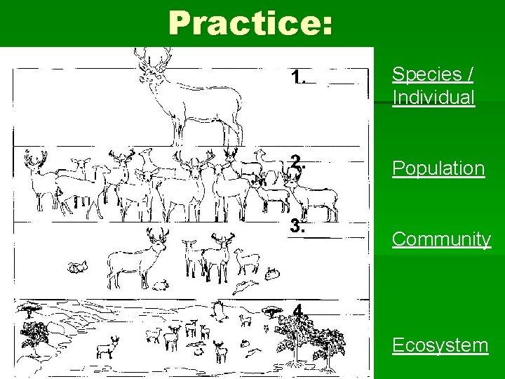 Practice: Species / Individual Population Community Ecosystem