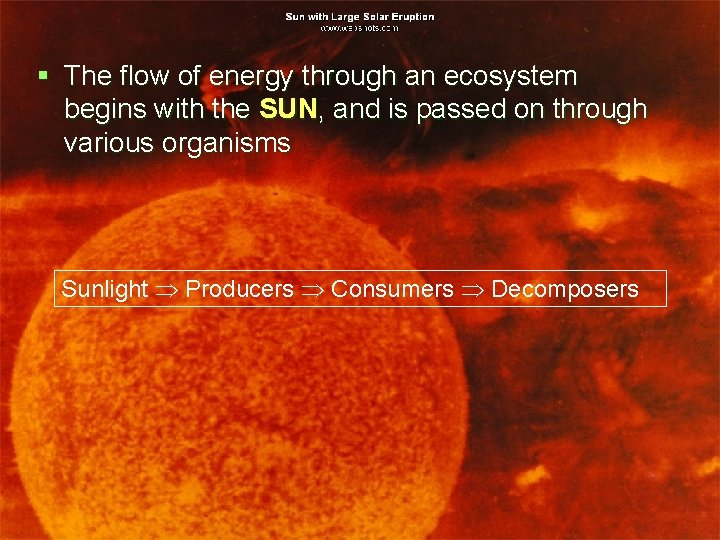 § The flow of energy through an ecosystem begins with the SUN, and is