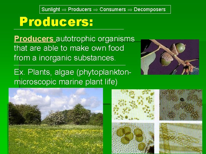 Sunlight Producers Consumers Decomposers Producers: Producers autotrophic organisms that are able to make own