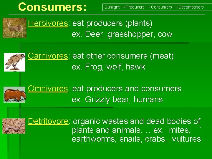 Consumers: Sunlight Producers Consumers Decomposers Herbivores: eat producers (plants) ex. Deer, grasshopper, cow Carnivores: