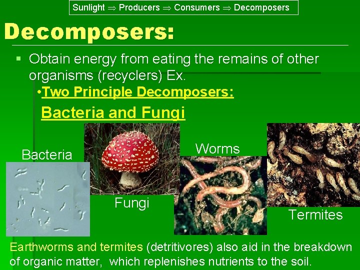 Sunlight Producers Consumers Decomposers: § Obtain energy from eating the remains of other organisms