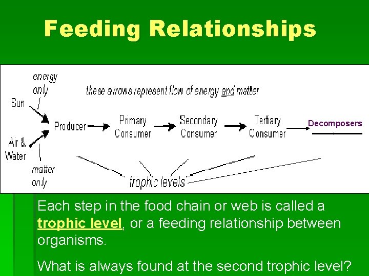 Feeding Relationships Decomposers 1 st 2 nd 3 rd 4 th 5 th Each