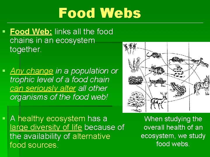 Food Webs § Food Web: links all the food chains in an ecosystem together.