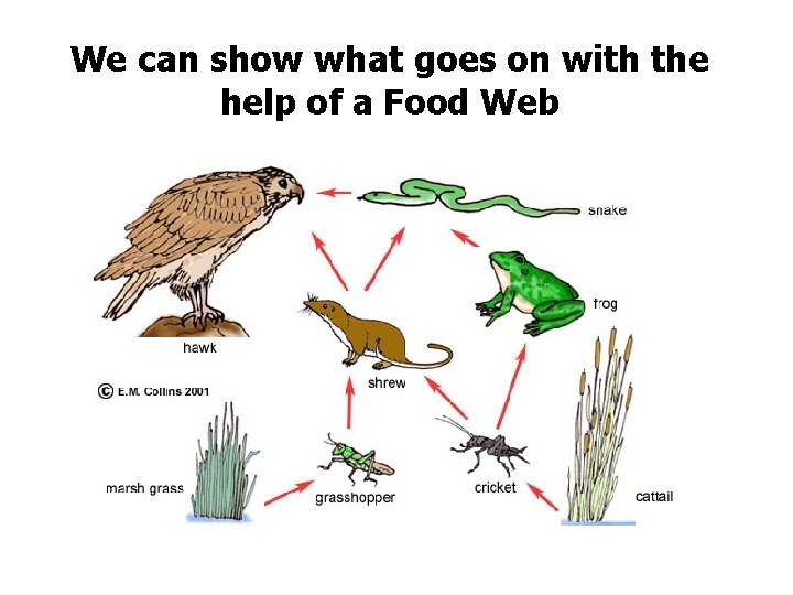 We can show what goes on with the help of a Food Web