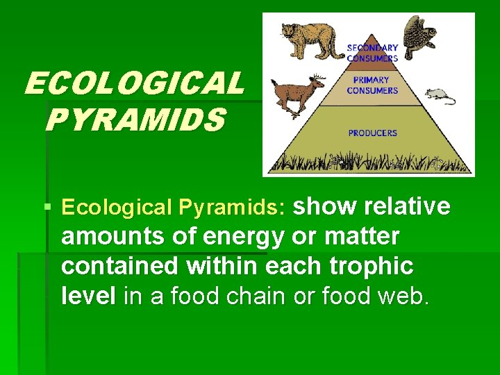 ECOLOGICAL PYRAMIDS § Ecological Pyramids: show relative amounts of energy or matter contained within