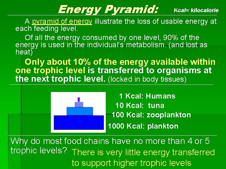 Energy Pyramid: Kcal= kilocalorie A pyramid of energy illustrate the loss of usable energy