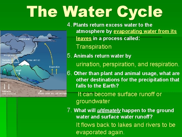 The Water Cycle 4. Plants return excess water to the atmosphere by evaporating water