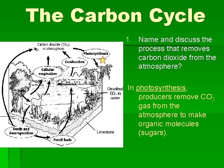 The Carbon Cycle 1. Name and discuss the process that removes carbon dioxide from