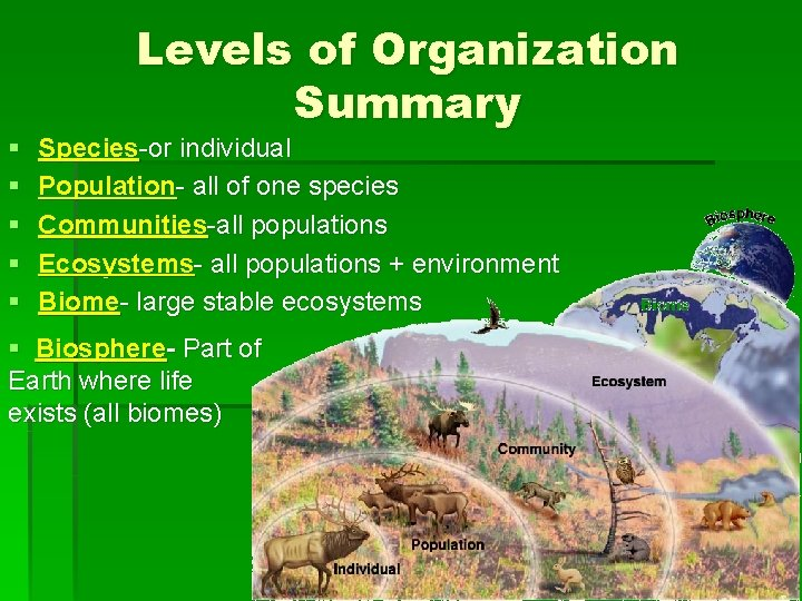§ § § Levels of Organization Summary Species-or individual Population- all of one species