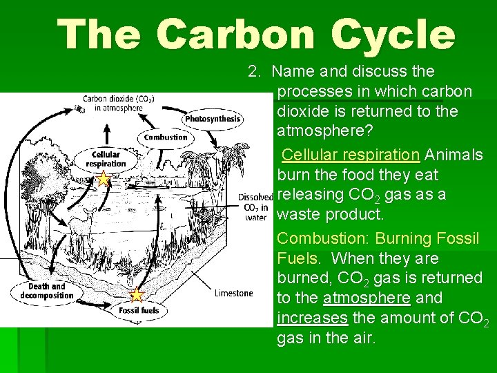 The Carbon Cycle 2. Name and discuss the processes in which carbon dioxide is