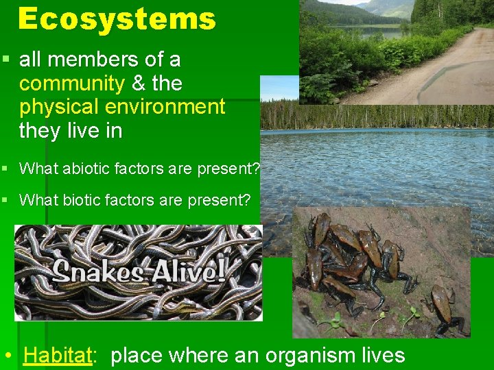 Ecosystems § all members of a community & the physical environment they live in
