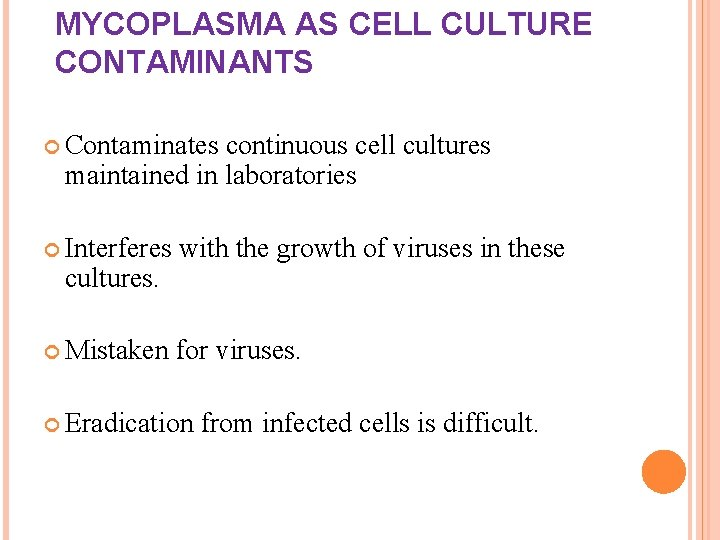 MYCOPLASMA AS CELL CULTURE CONTAMINANTS Contaminates continuous cell cultures maintained in laboratories Interferes with