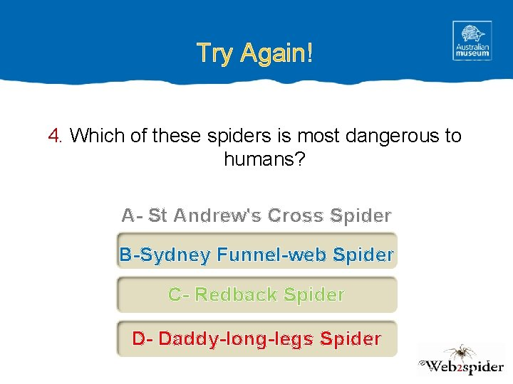 Try Again! 4. Which of these spiders is most dangerous to humans? A- St