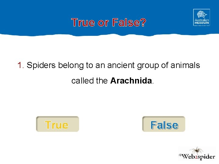 True or False? 1. Spiders belong to an ancient group of animals called the