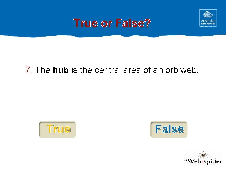 True or False? 7. The hub is the central area of an orb web.