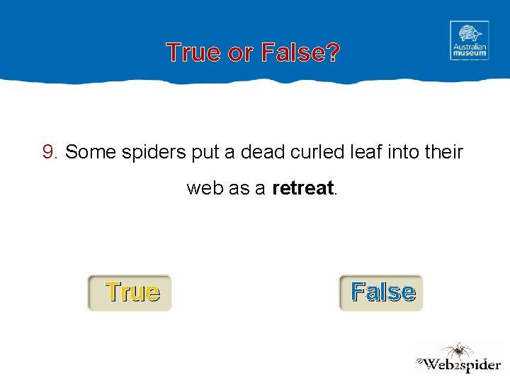True or False? 9. Some spiders put a dead curled leaf into their web