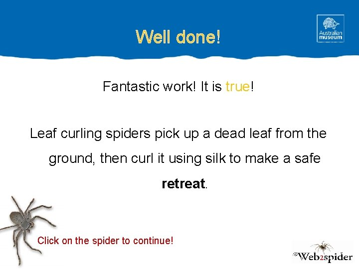 Well done! Fantastic work! It is true! Leaf curling spiders pick up a dead