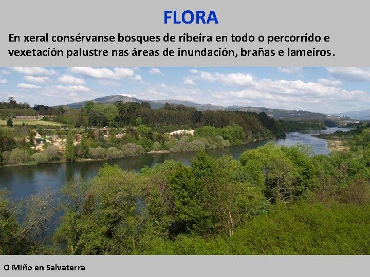 FLORA En xeral consérvanse bosques de ribeira en todo o percorrido e vexetación palustre