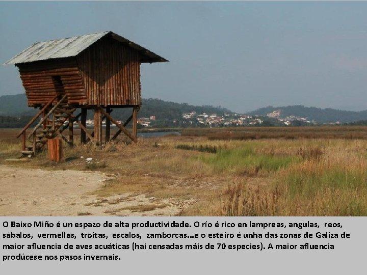 O Baixo Miño é un espazo de alta productividade. O río é rico en