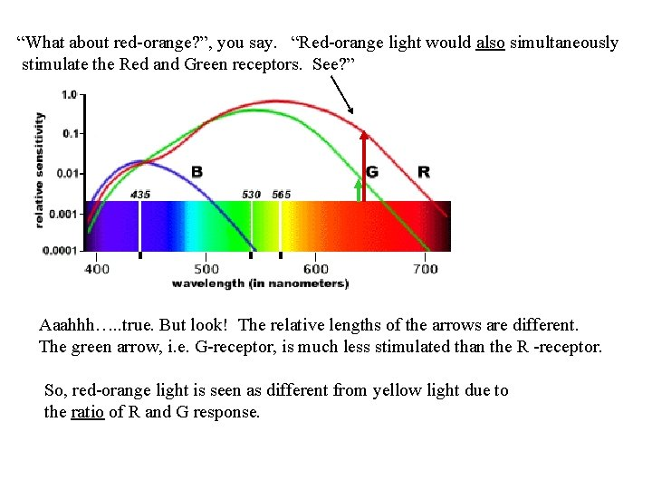 """""""What about red-orange? """", you say. """"Red-orange light would also simultaneously stimulate the Red"""