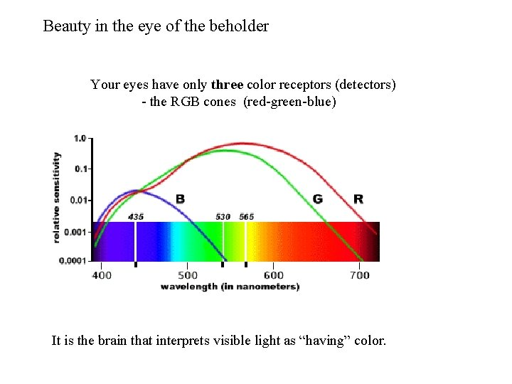 Beauty in the eye of the beholder Your eyes have only three color receptors