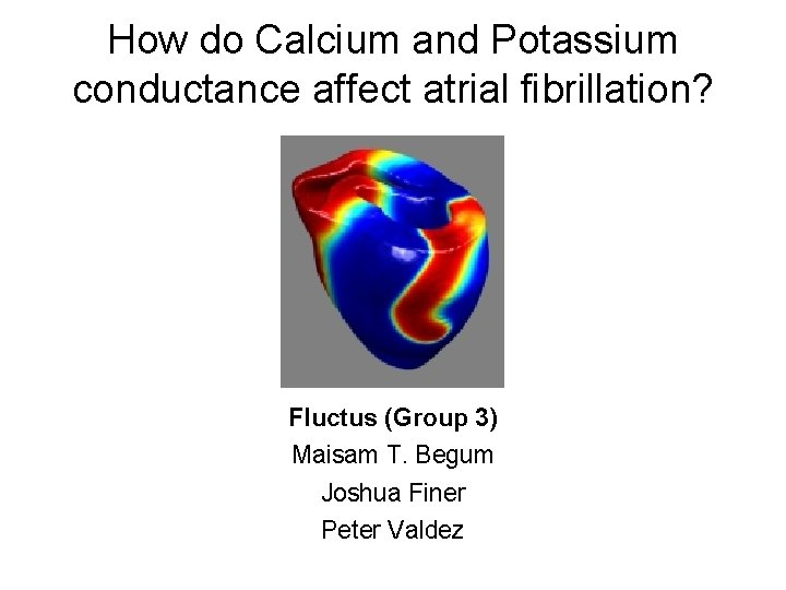 How do Calcium and Potassium conductance affect atrial fibrillation? Fluctus (Group 3) Maisam T.