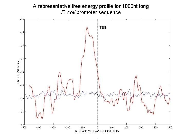 A representative free energy profile for 1000 nt long E. coli promoter sequence