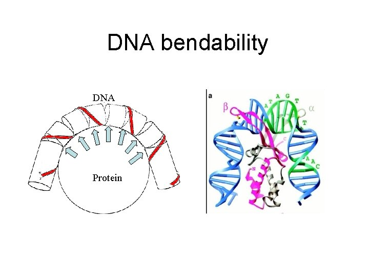 DNA bendability DNA Protein
