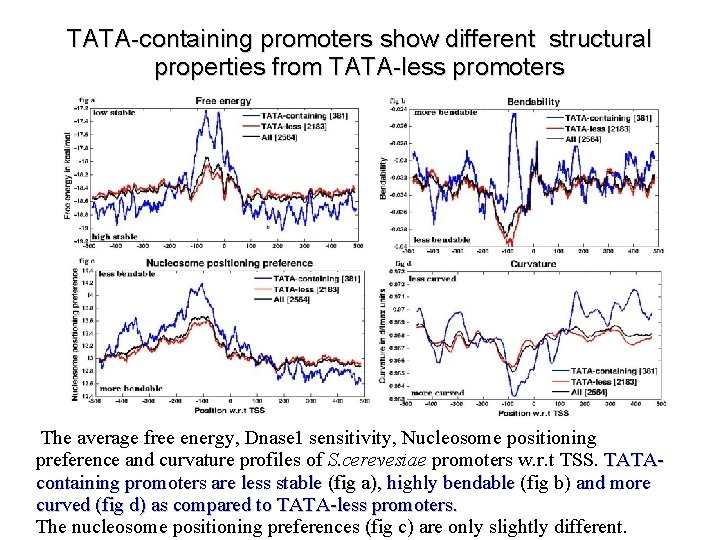 TATA-containing promoters show different structural properties from TATA-less promoters The average free energy, Dnase