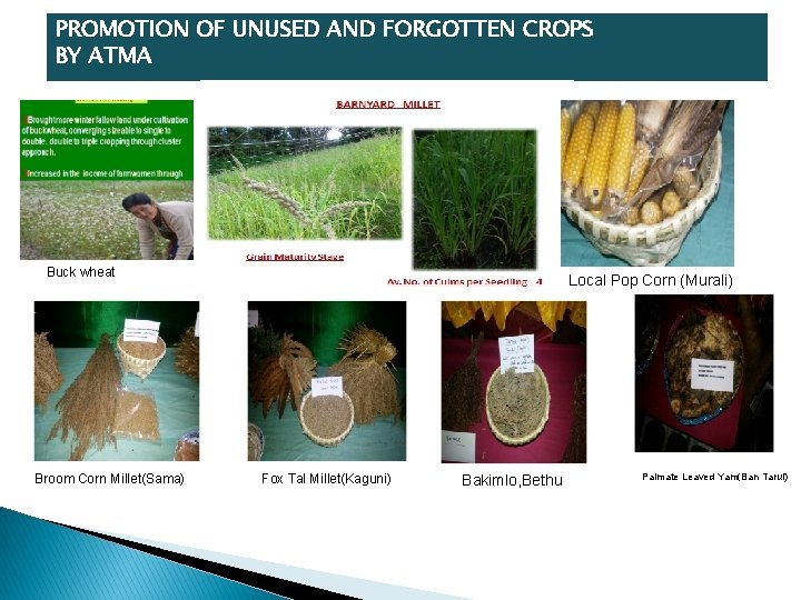 PROMOTION OF UNUSED AND FORGOTTEN CROPS BY ATMA Buck wheat Broom Corn Millet(Sama) Local