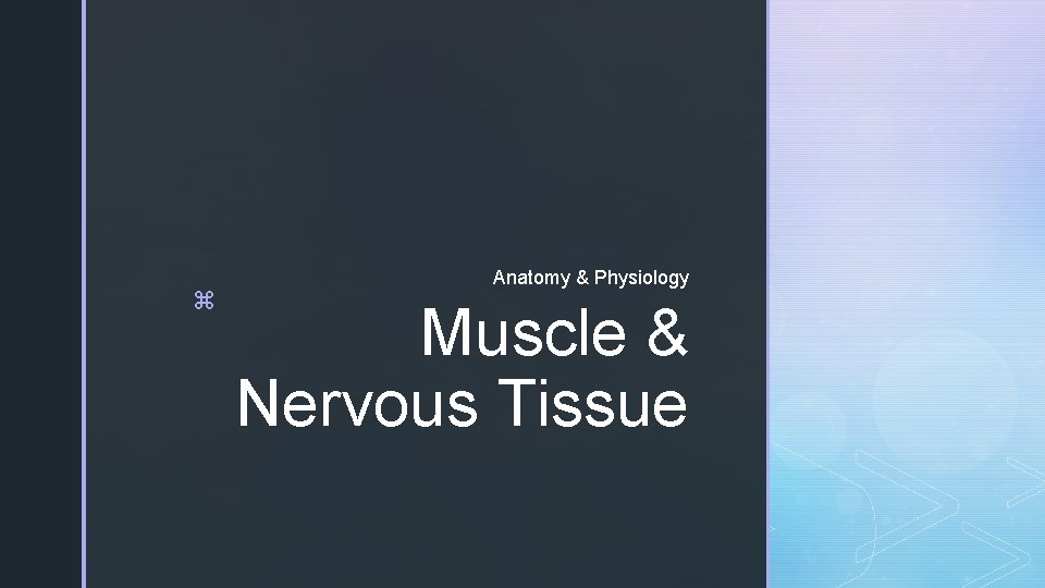 z Anatomy & Physiology Muscle & Nervous Tissue