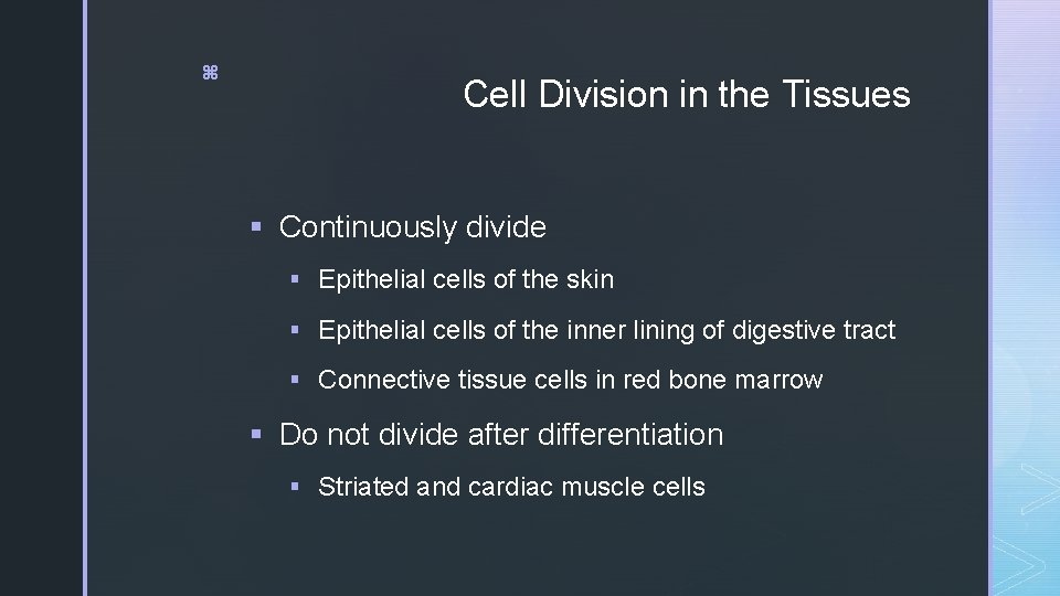 z Cell Division in the Tissues § Continuously divide § Epithelial cells of the