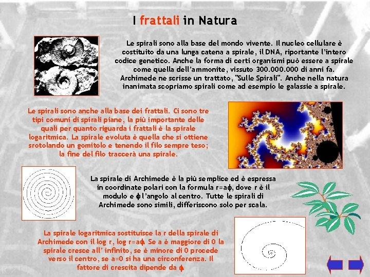I frattali in Natura Le spirali sono alla base del mondo vivente. Il nucleo