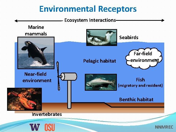 Environmental Receptors Ecosystem Interactions Marine mammals Seabirds Pelagic habitat Near-field environment Fish (migratory and