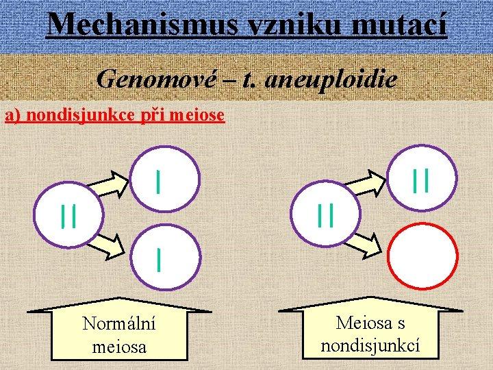 Mechanismus vzniku mutací Genomové – t. aneuploidie a) nondisjunkce při meiose Normální meiosa Meiosa