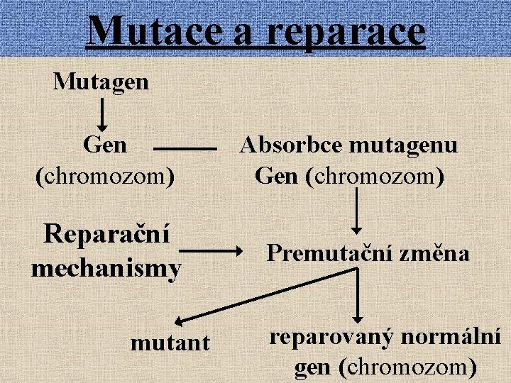 Mutace a reparace Mutagen Gen (chromozom) Reparační mechanismy mutant Absorbce mutagenu Gen (chromozom) Premutační