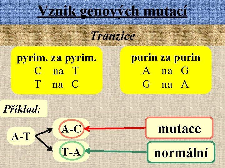 Vznik genových mutací Tranzice pyrim. za pyrim. C na T T na C purin