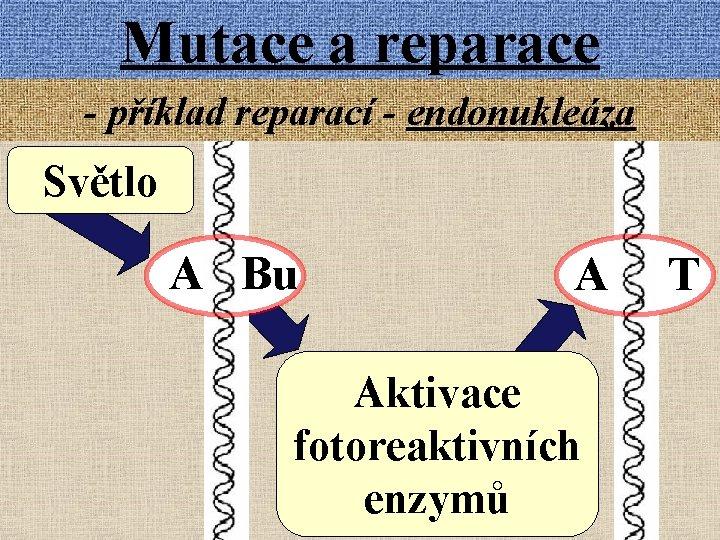 Mutace a reparace - příklad reparací - endonukleáza Světlo A Bu A Aktivace fotoreaktivních