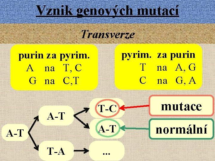 Vznik genových mutací Transverze pyrim. za purin T na A, G C na G,