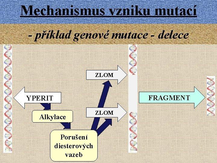 Mechanismus vzniku mutací - příklad genové mutace - delece ZLOM FRAGMENT YPERIT Alkylace Porušení